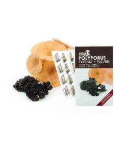 Polyporus ABM Extrakt + Pulver in Kapselform 120 Kapseln